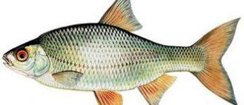 Tarifs 2019 de l'association de pêche de Souesmes